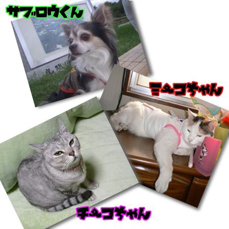 09_0110_03.jpg