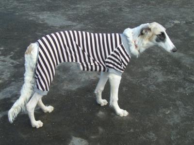囚人 saya