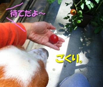 200807_redblue2.jpg