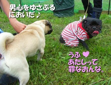 200807_shima6.jpg