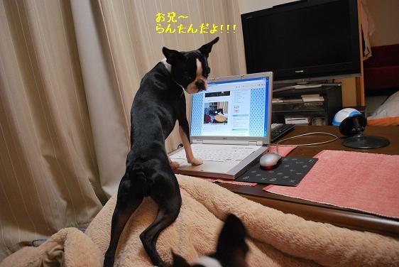 20110210DSC_7688.jpg