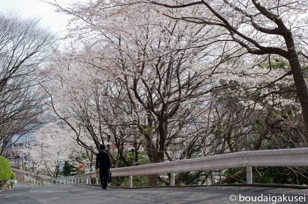 桜、入学式と、少々、鉄分 10