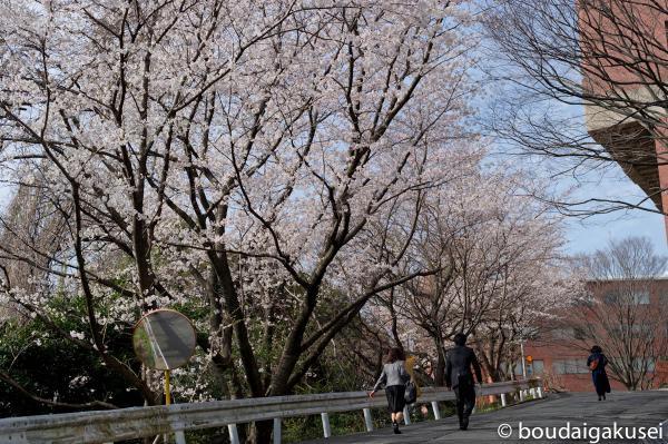 桜、入学式と、少々、鉄分 11