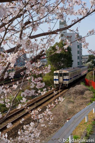 桜、入学式と、少々、鉄分 12