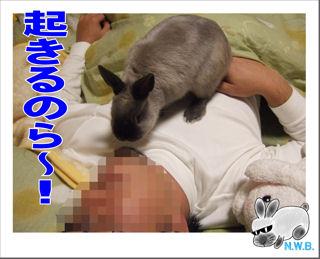 起きるのら~!