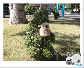 うさぎの植木