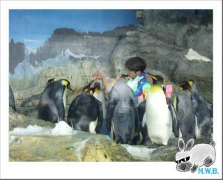 ペンギンの集団