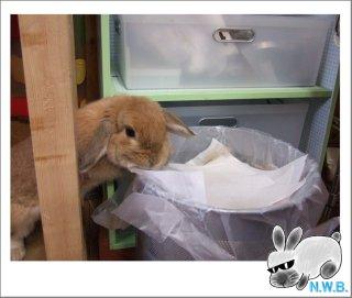 ゴミ箱物色中?