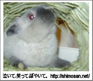 トンネル作業その4