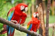 10赤いオーム2羽
