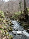 春の小渓流