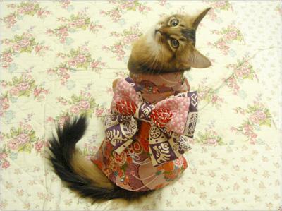 着物猫.jpg