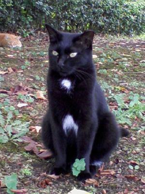 日比谷公園 黒猫
