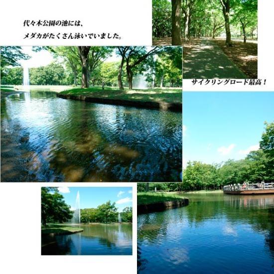 代々木公園550サイズ・230;怐N#229;・#229;恍_convert_20080815143808