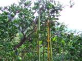 竹のリサイクル