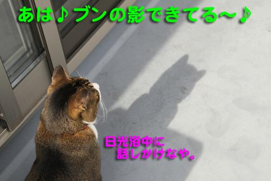 IMG_0519_Rブンの影~♪