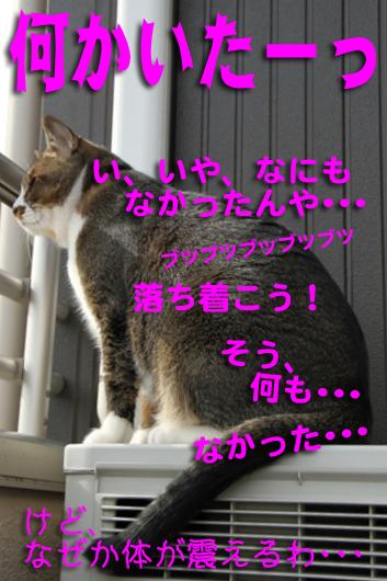 IMG_0590_Rh何かいたっ!