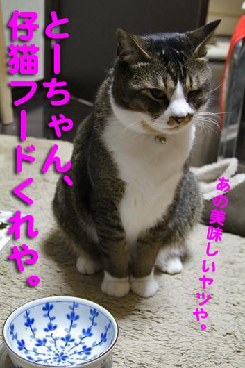 IMG_0245_R仔猫フードくれ