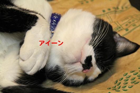 IMG_0044_Rアイーン