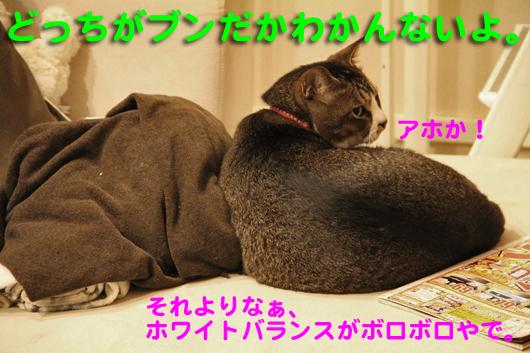 IMG_0367_Rどっちがブン?