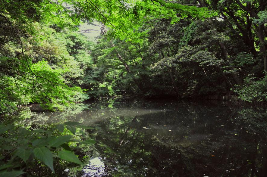 カワセミのいる池