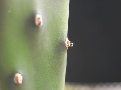 刺座のキラキラ1
