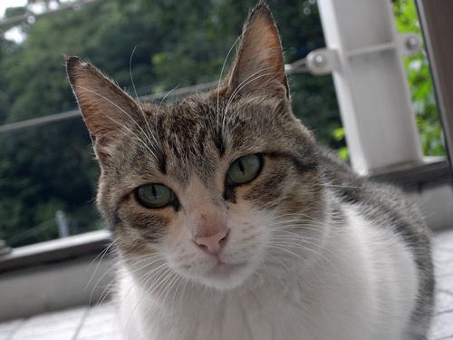 sakamichi82.jpg