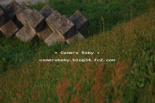 DSC_0034_512のコピー