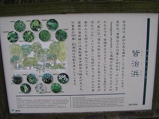 ishigaki217