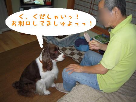 dog 020-1