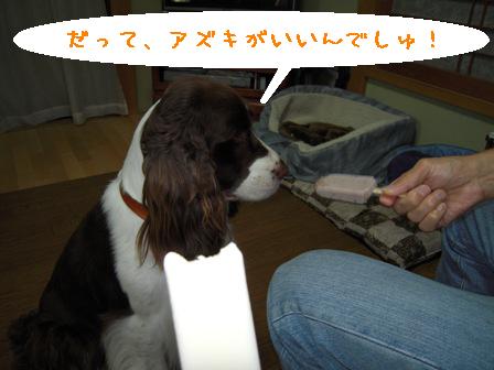 dog 022-1