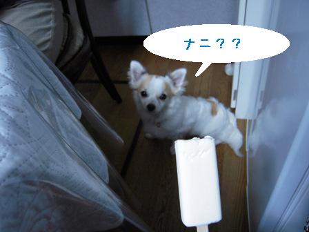 dog 026-1