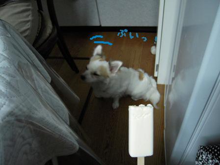dog 025-1