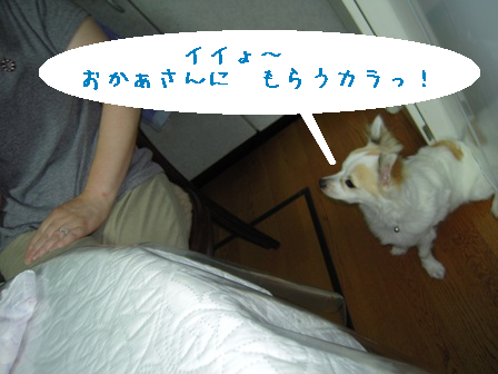 dog 024-1