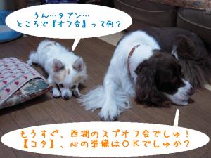 dog 082-1