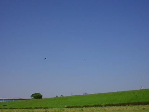 青空とヒバリ