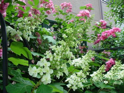 5月28日の庭