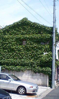 蔦のアパート