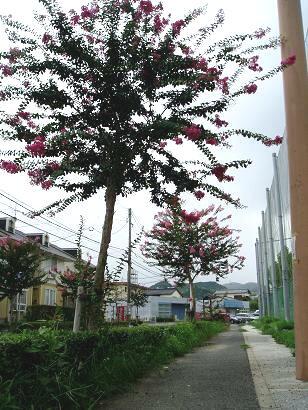 公園の外周のとこには赤ぃ花をっけた木々が・・♪
