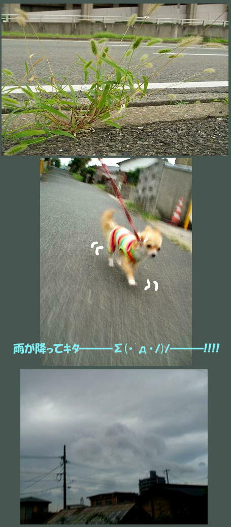 雨降ってキタ━━━Σ(・`д・ノ)ノ━━━!!!!
