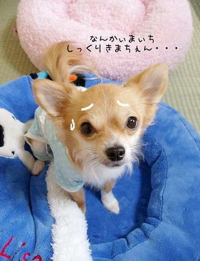 ゥーン・・・・・U( =ω= )U