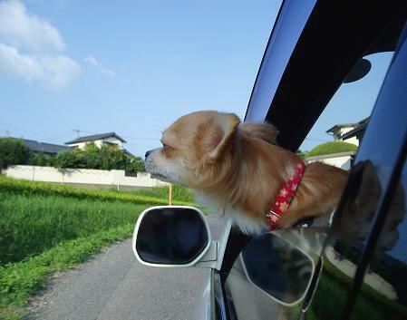 窓を開け~ 外の匂ぃを (U。 -ω)クンクク~ン