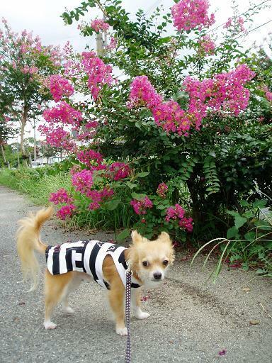 めちゃ低ぃとこで花を咲かせてる木と( *^w[◎]oパチリ