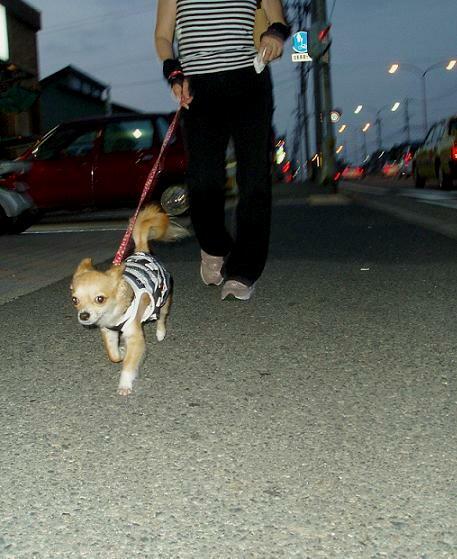 夜のぉ散歩2