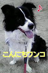 20080823152551.jpg