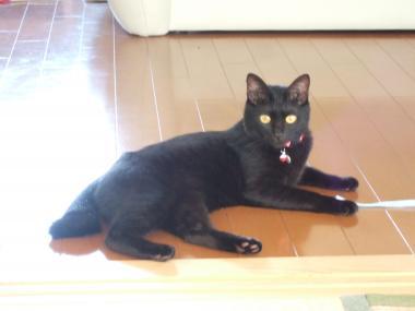 黒猫のジジ(♀もうすぐ2歳)