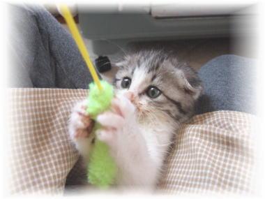 初めてのネコじゃらし