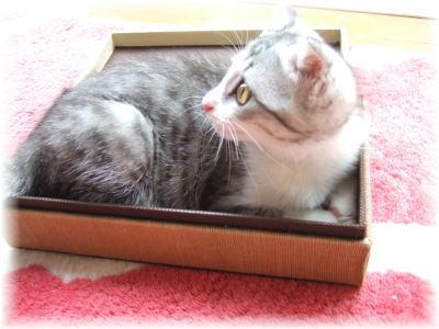 定番ですが、箱猫