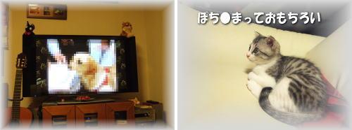 テレビ おもちろい