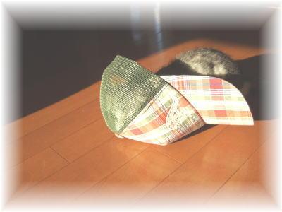 帽子に入ったメイ